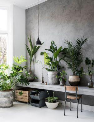 Inspiration - Indendørs planter - www.frkgreve.dk