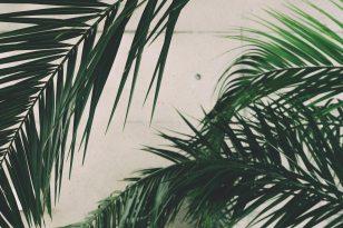 Goodbye Summer - Green shades leaves
